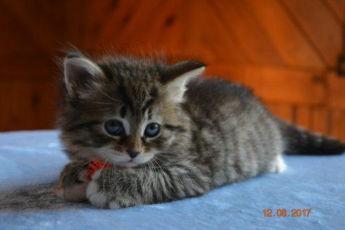 Рекомендации по приобретению и уходу за котенком